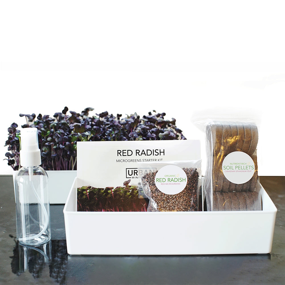 Grow Your Own Ruby Red Radish Microgreens Kit - Urban Minimalist