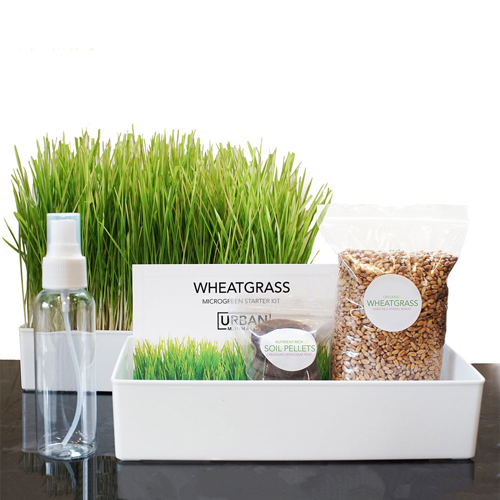 Grow Your Own Wheatgrass Kit - Urban Minimalist