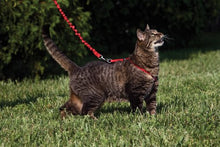 Load image into Gallery viewer, Premier Pet Come With Me Kitty Harness & Bungee Lead Dusty Rose Small