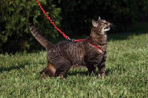 Premier Pet Come With Me Kitty Harness & Bungee Lead Dusty Rose Small