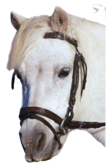 Showcraft Raised Weaved Bridle