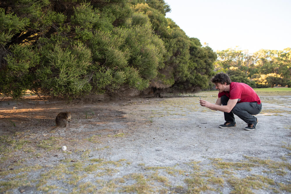 how to approach for a quokka selfie