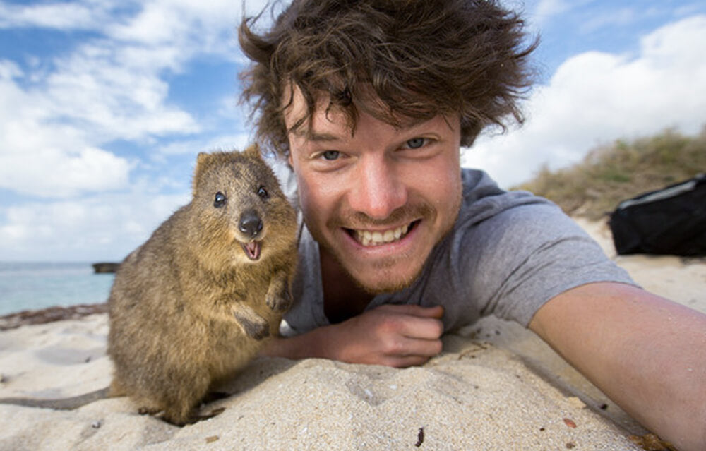 quokka-selfie-allan-dixon-the-best-quokka-selfie-ever