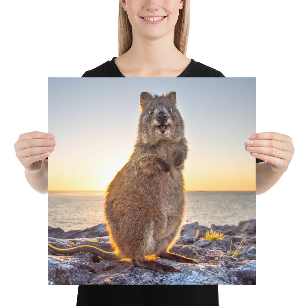 Quokka Smile Sunrise - Poster