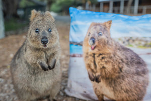 Quokka Smile Throw Pillow Case - Square