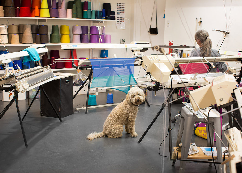 Goldendoodle in the Golightly Cashmere artisan knitting studio in Santa Fe New Mexico