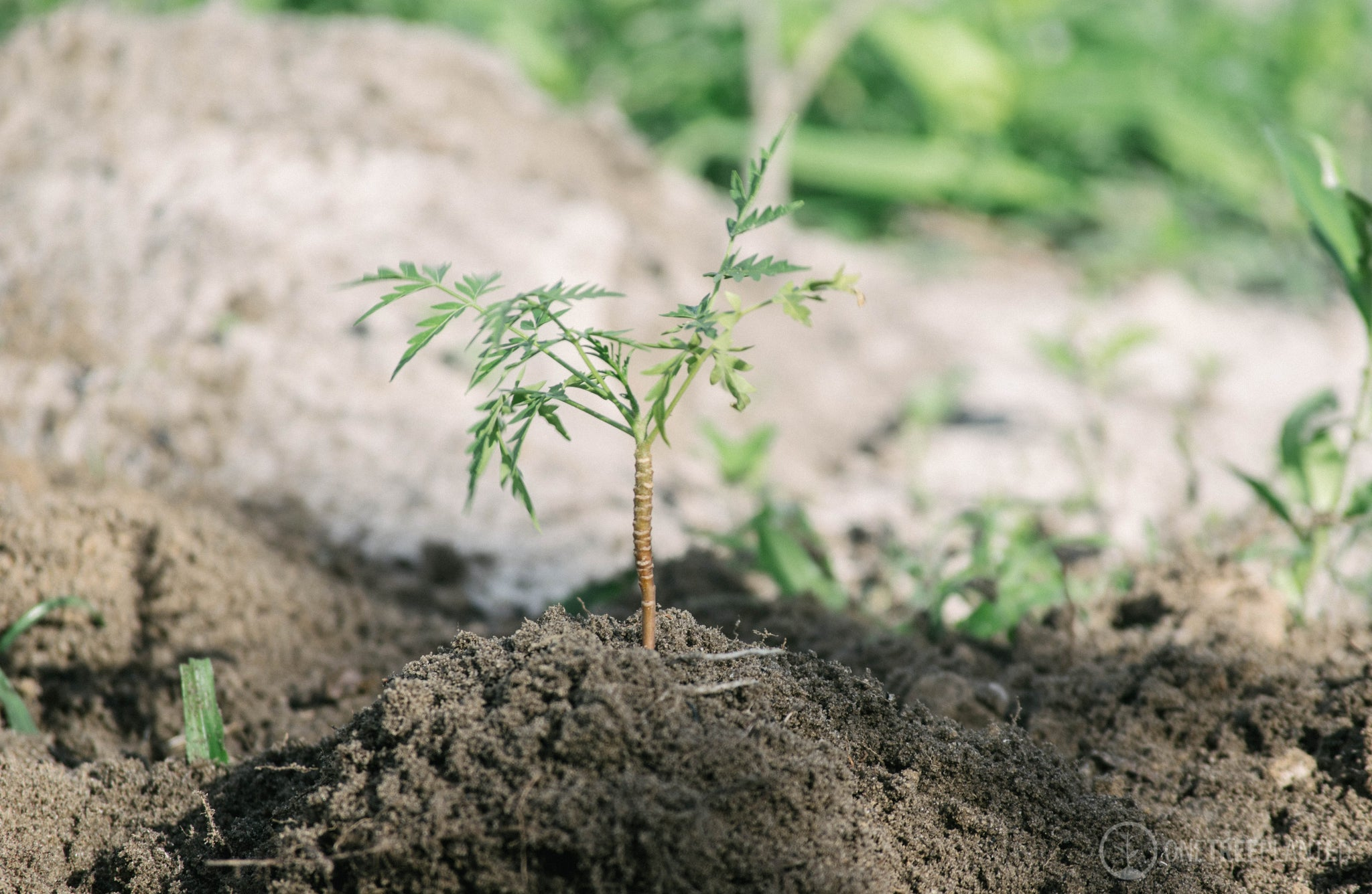 How Planting Trees Could Be The Secret To Saving Planet Earth