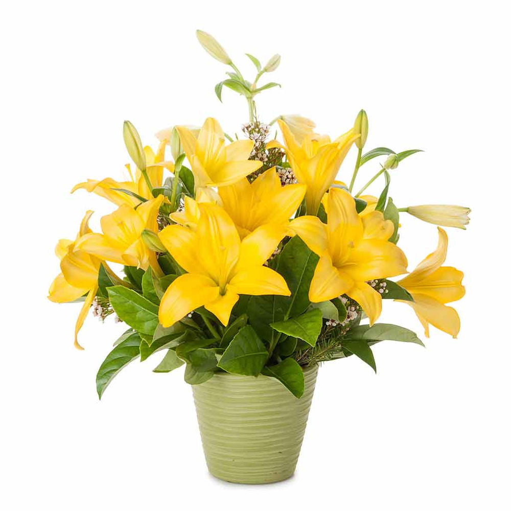 Cute Yellow Lily Pot - Click For Flowers