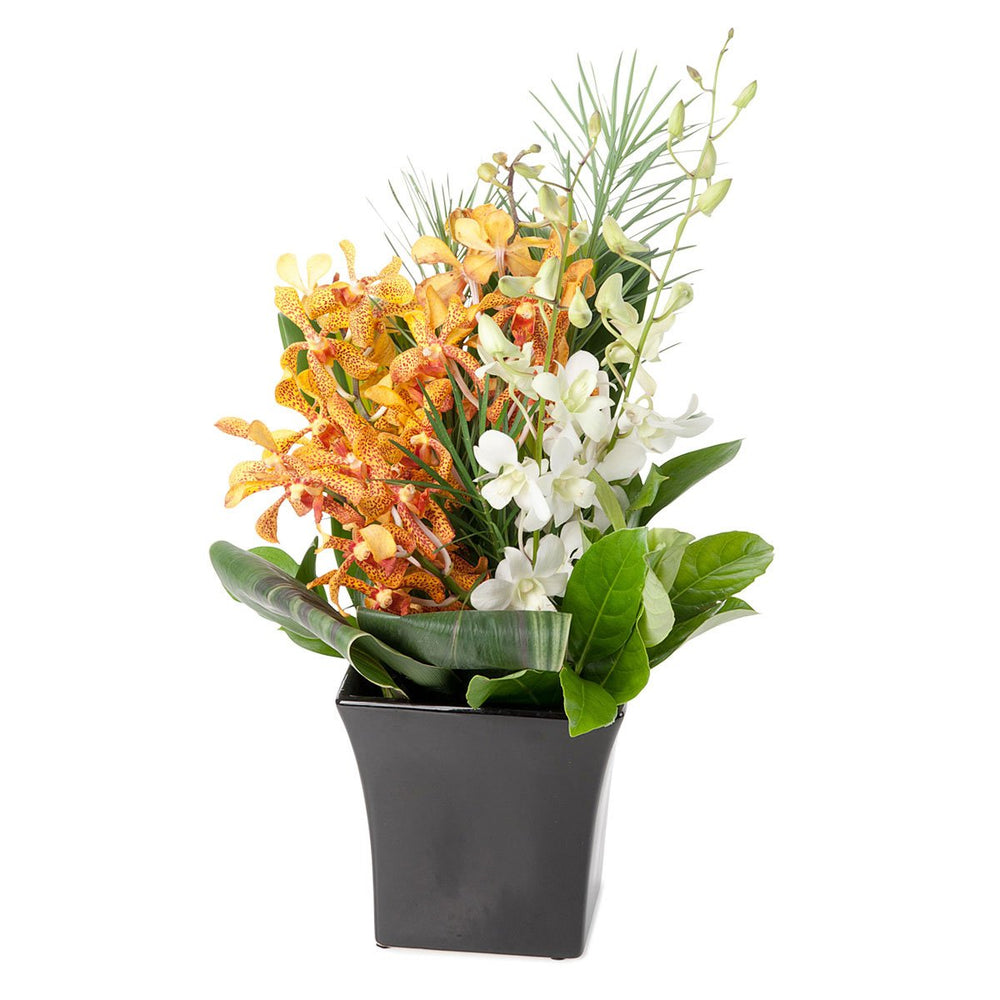 Yellow and White Orchids - Click For Flowers