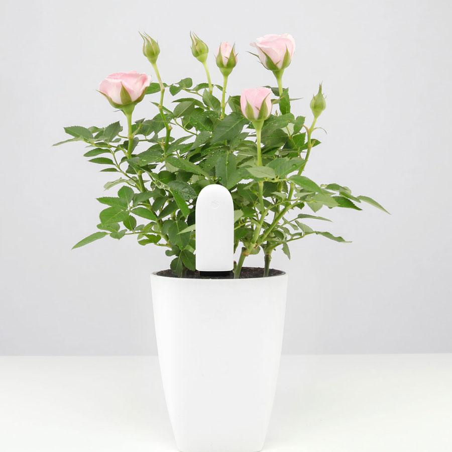 Smart Flower Monitor - 70%OFF!