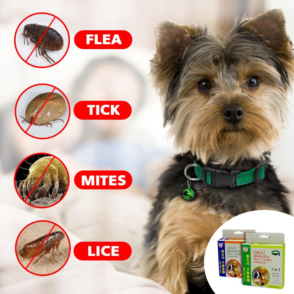 Dog/ Cat Outdoor Anti Flea Collar - 70% OFF!