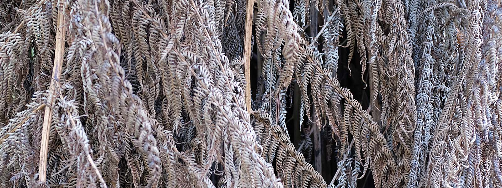 Dry grey fern leaves close up - OrangeBrown.com.au