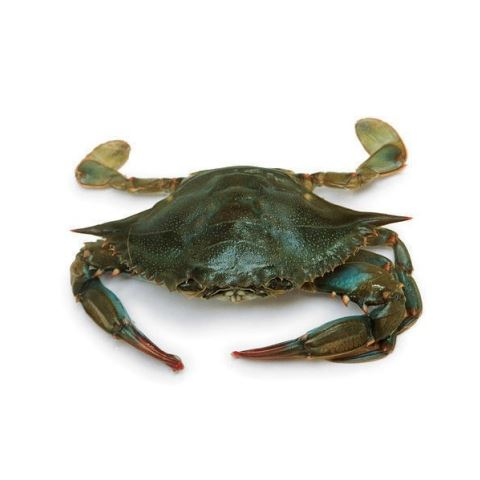Frozen Whole Sea Crab ( 2 - 3 pieces ) 500gm