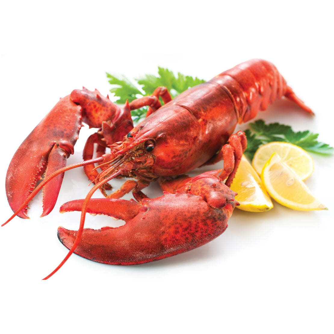 FROZEN LOBSTER WHOLE - 700 - 900 Grams