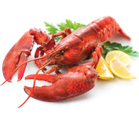 Lobster Whole 700-900gm