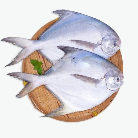 FROZEN POMFRET SILVER - 500 Grams(approx 3-4 whole fish)