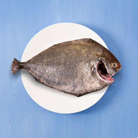 Frozen Black Pomfret Whole 550-700 gms (Cleaned & Gutted)