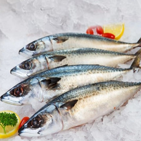 FROZEN INDIAN MACKEREL /BANGDA/AYALA- 1 KG BAG (5-6 Whole Fish)
