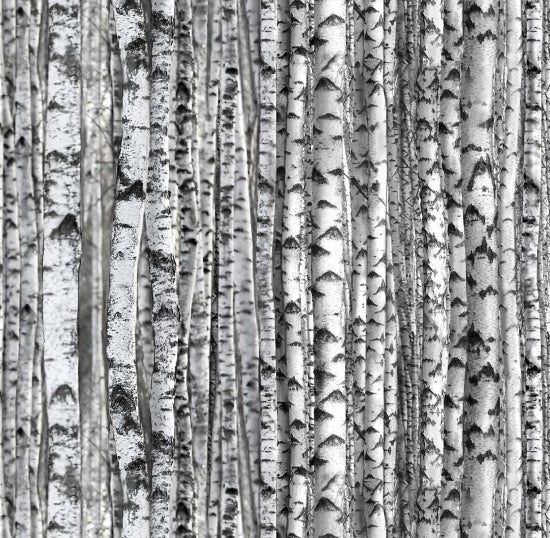 Elizabeth's Studio White Birch