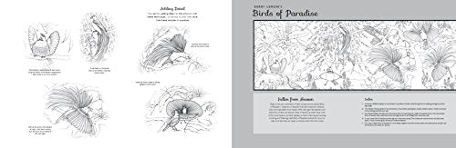 Pictura: Birds Of Paradise