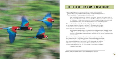 Rainforest Bird Rescue: Changing The Future For Endangered Wildlife (Firefly Animal Rescue)