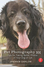 Pet Photography 101: Tips For Taking Better Photos Of Your Dog Or Cat