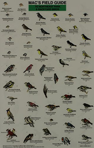 Mac'S Field Guide To Northeast Park And Backyard Birds (Laminated Card)
