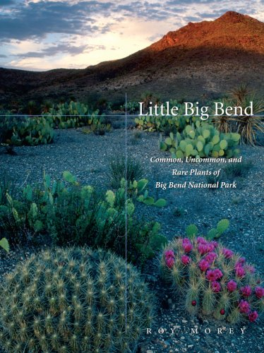 Little Big Bend: Common, Uncommon, And Rare Plants Of Big Bend National Park (Grover E. Murray Studies In The American Southwest)