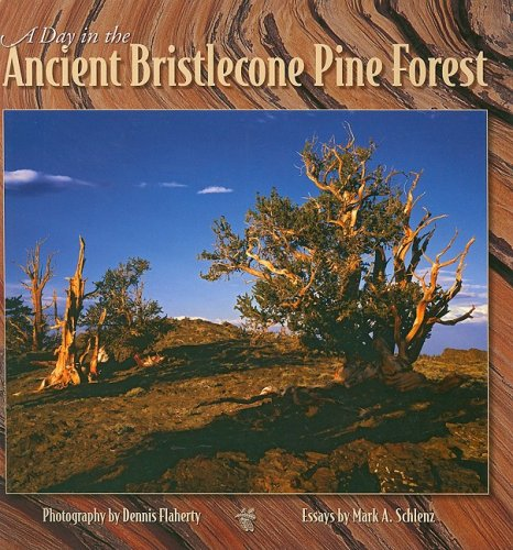 A Day In The Ancient Bristlecone Pine Forest (Companion Press Series)