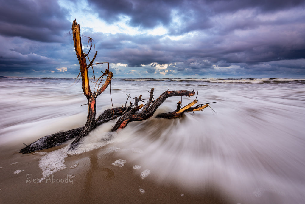 LENNOX BEACH LOGS - Ben Aboody Photography