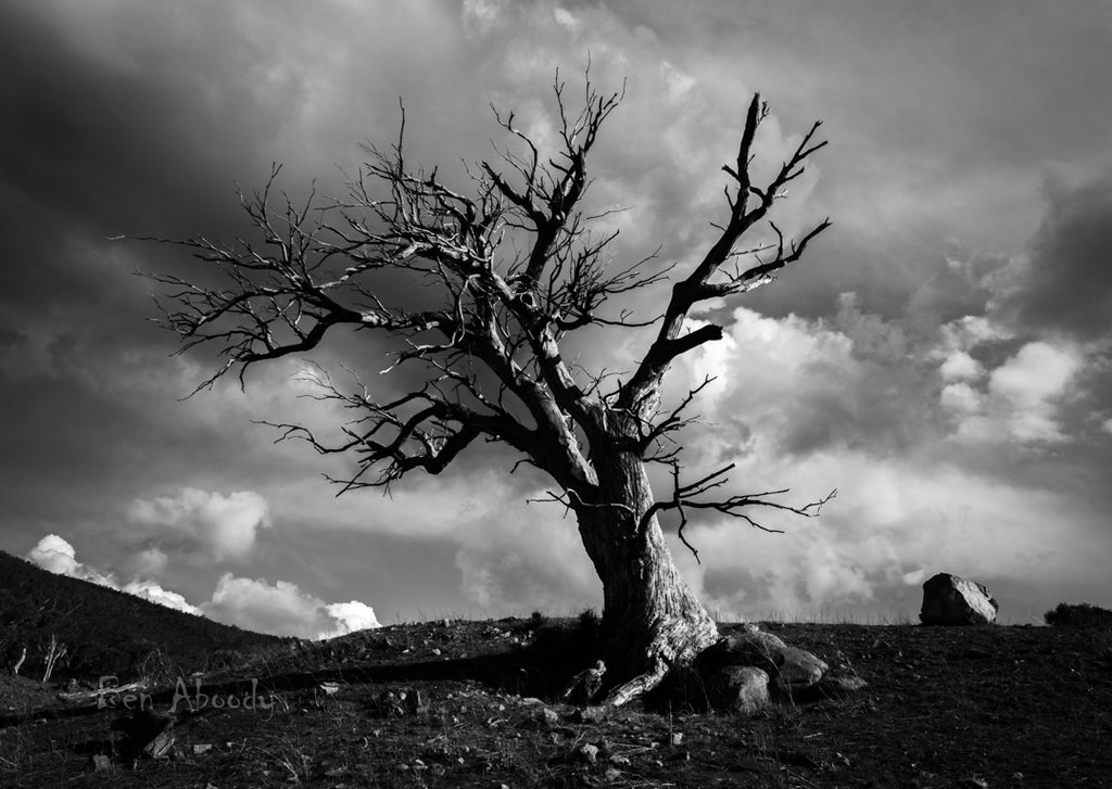 The Ghost Tree, Jindabyne. - Ben Aboody Photography