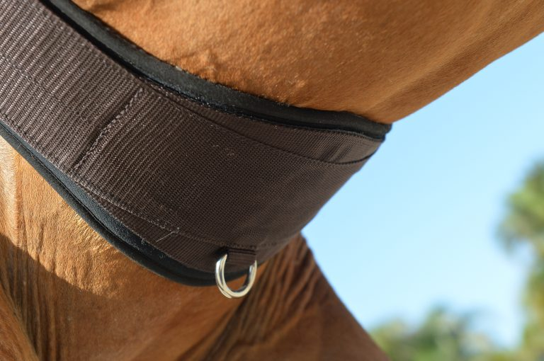 Essential Girth W/ SheepsWool Liner - The Horse Shop