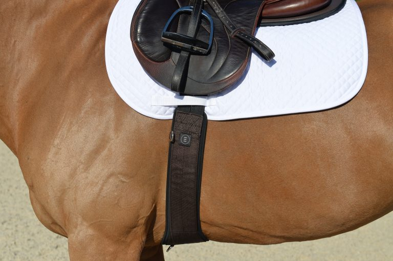 Essential Girth W/ SmartFabric Liner - The Horse Shop