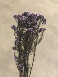 Rice Flower (preserved) - Purple