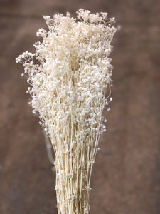 Gypsophila Preserved - White