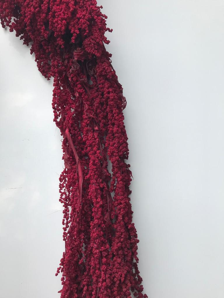 Amaranthus - Wine Red