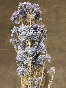 Rice Flower (preserved) - Lavender