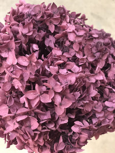 Hydrangea (preserved) 20cm - Grape Purple