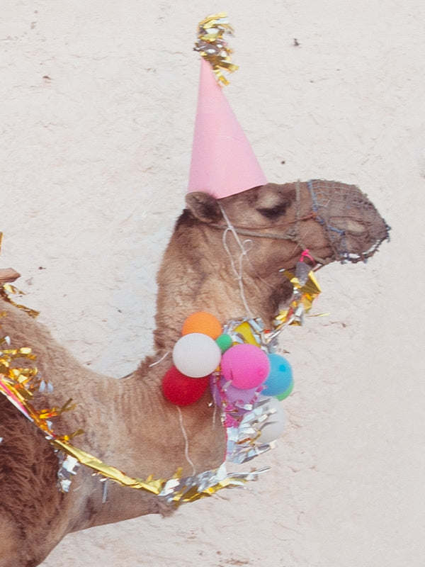 Party Camel
