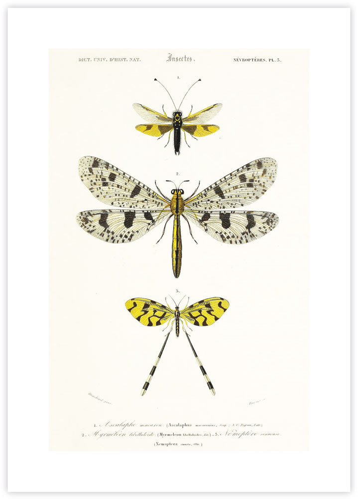 Vintage Insects