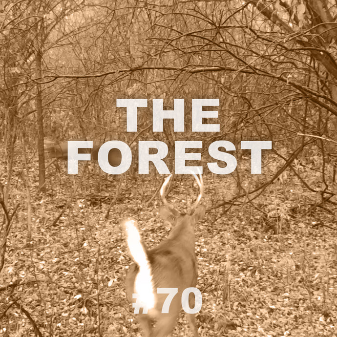 #70 The Forest