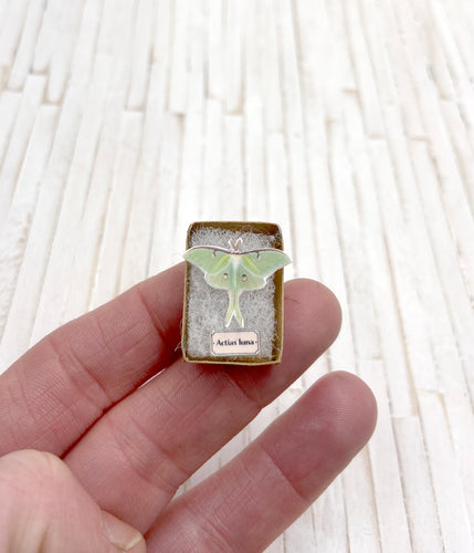 1:12th scale Miniature Luna Moth Specimen