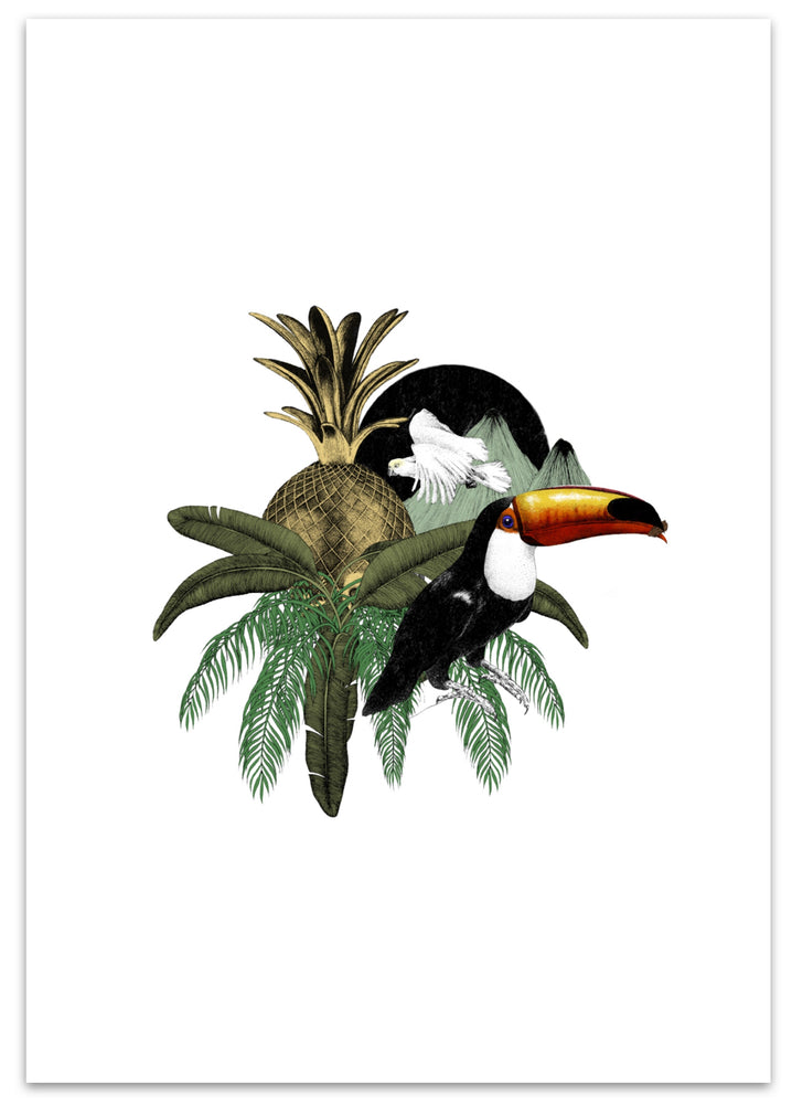 Toucan Jungle Colour