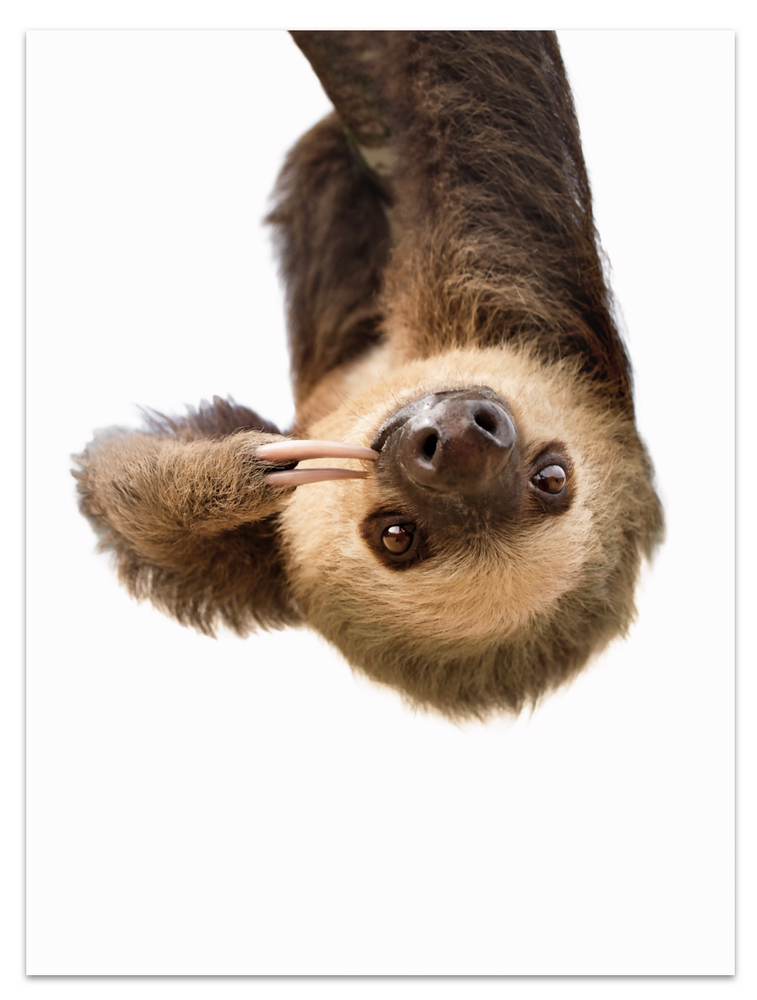 Upside down sloth
