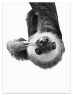 Upside down sloth BW