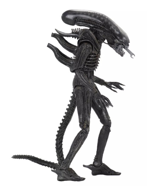 Alien Neca 40th Anniversary Series 3 Xenomorph Action Figure Pre-Order