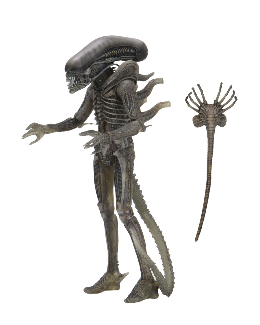Alien Neca 40th Anniversary Series 4 Gigers Xenomorph Alien Action Figure Pre-Order