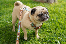 Harness, Small w/leash