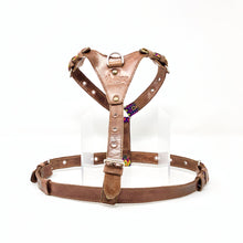 Harness, Medium