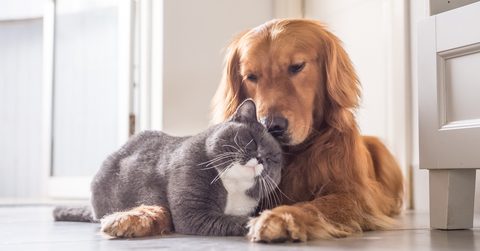 How To Help Your Dog And Cat Become Best Friends!